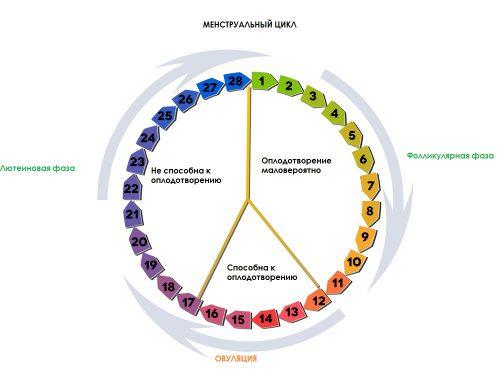 Сроки менструационного цикла 2