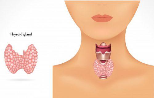 Щитовидная железа женщины